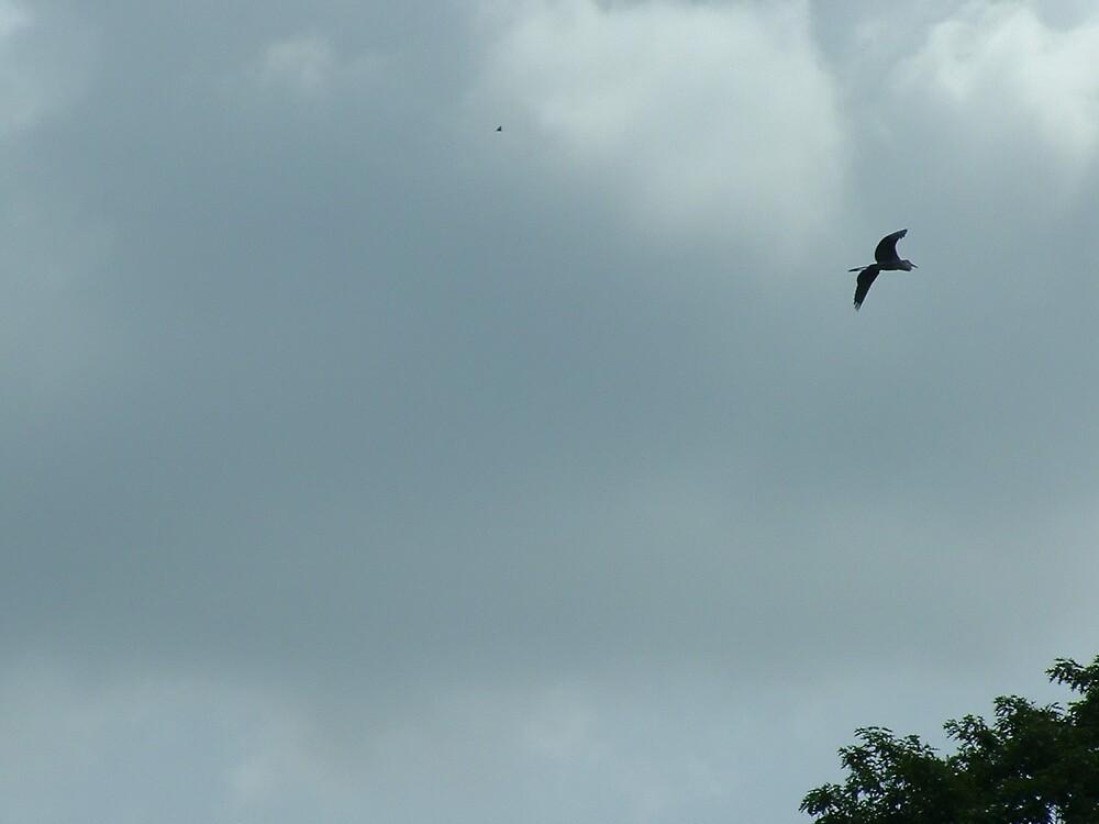 Crane Flying by Brian Burdick