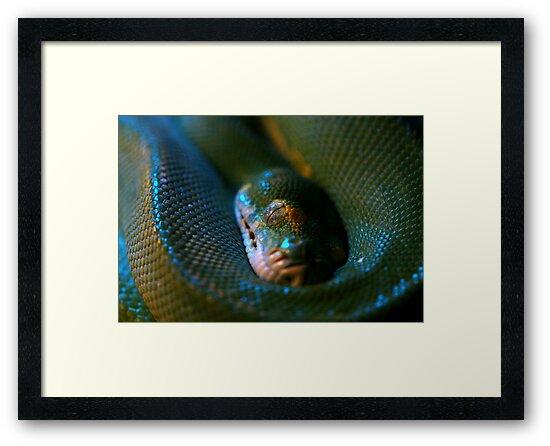 Snake Eye by Gavan  Mitchell