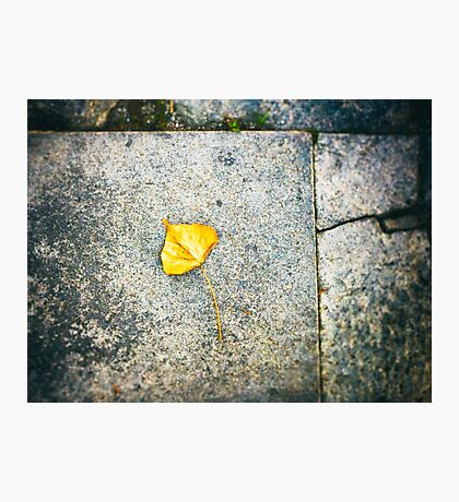Yellow leaf Photographic Print
