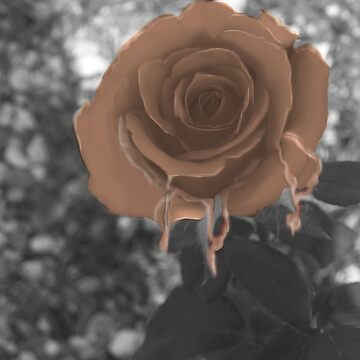 Chocolate Rose by Artress