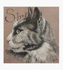 Siri, cute cat Photographic Print