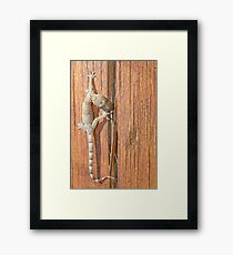 Gecko walking over a piece of wood Framed Print
