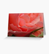 Delicate Pink Rose (Macro) Greeting Card
