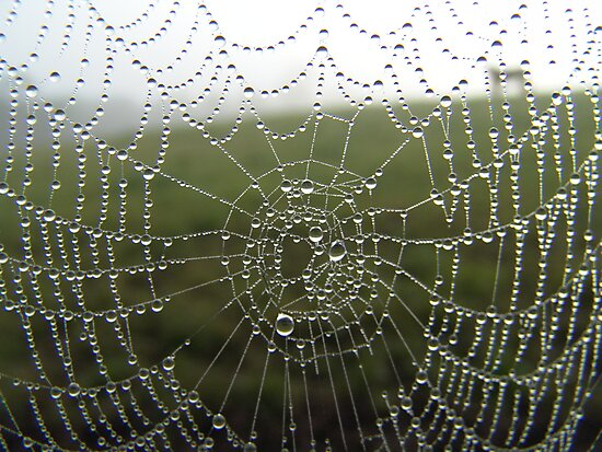 diamonds on a web by Sean Farragher