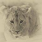 I am a cute cub of the Mhangeni pride! by Anthony Goldman
