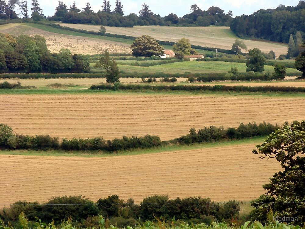 Rural View From Somerset by Madman