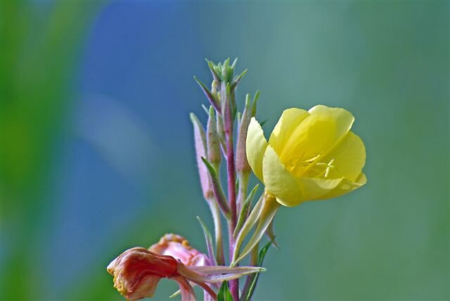 Flower by raptrlvr