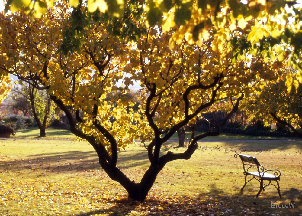 Autumn by BruceW