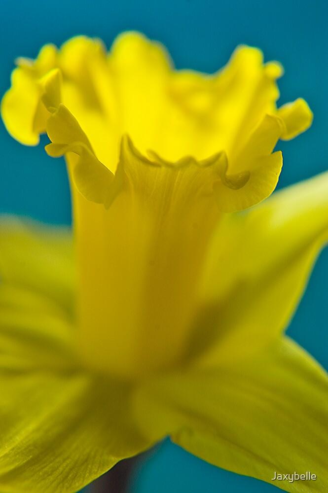 Daffodil 4 by Jaxybelle