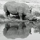 White rhino reflection by jozi1