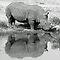 Nature's Mirror... # 006