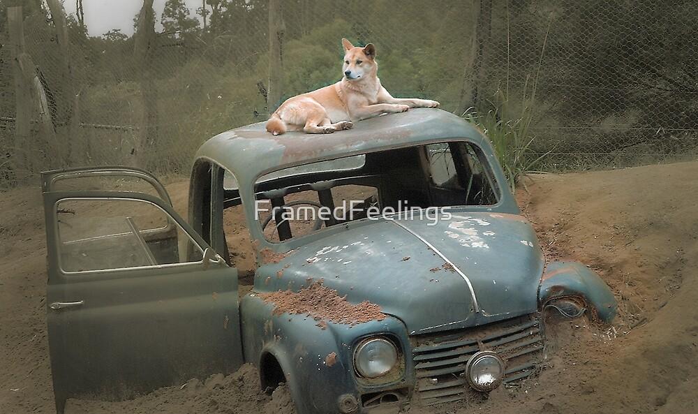 Dingo on antique car by FramedFeelings
