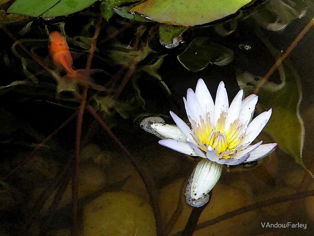 Angus' pond by VAndowFarley