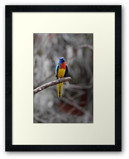 Bird On A Branch  by EOS20
