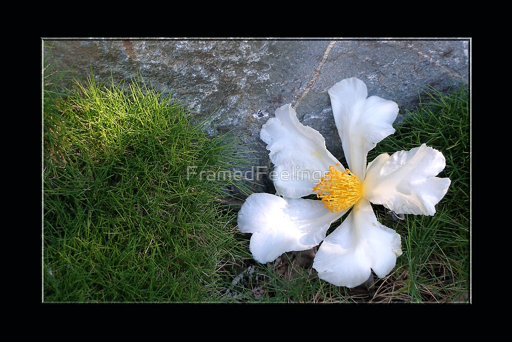 Flower, grass, stone by FramedFeelings