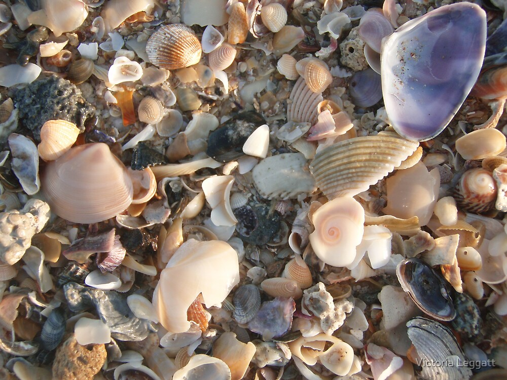 A Small Piece of the Beach by Victoria Leggatt