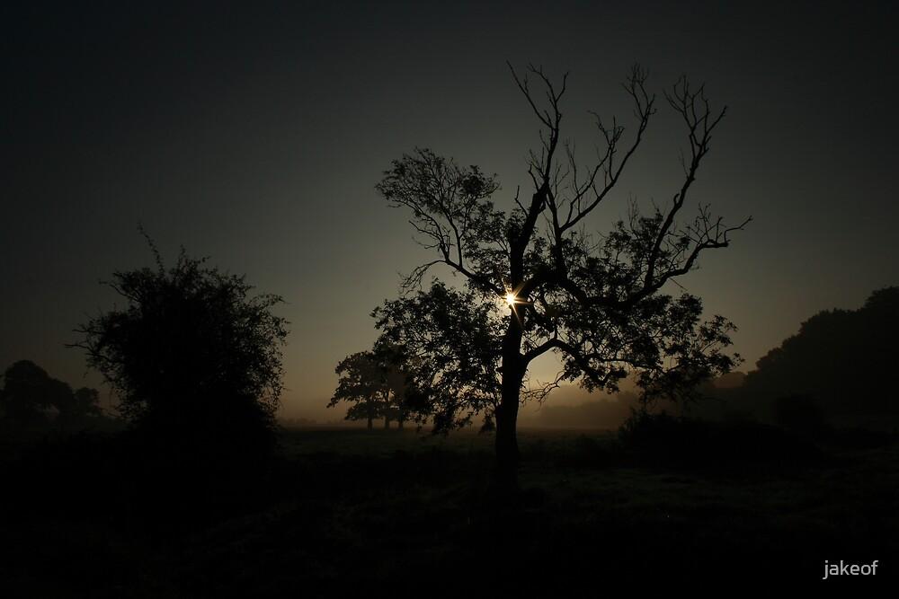 Misty Morning by jakeof