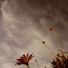 Waiting For Rain by Johdie Fairweather