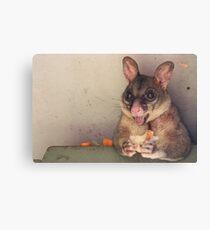 Possum. Canvas Print