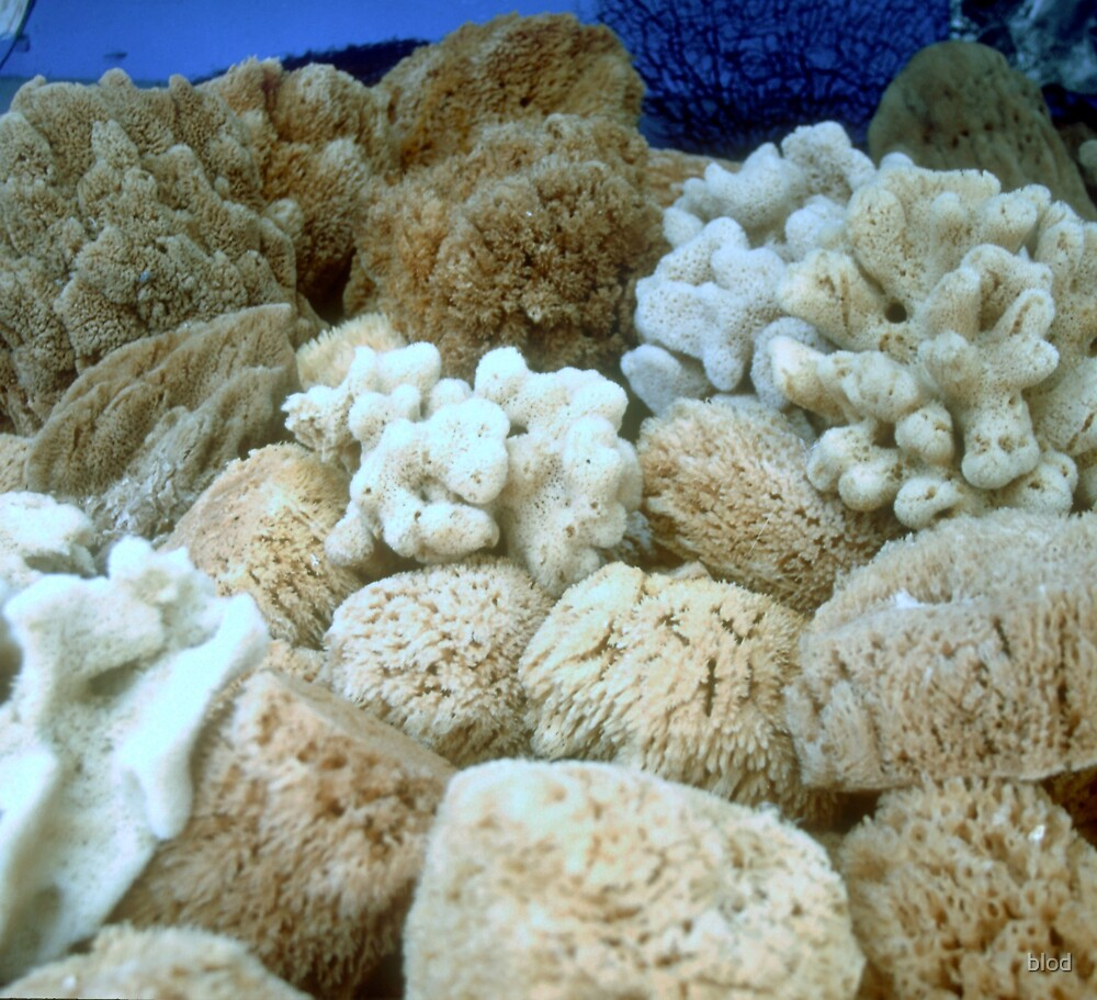 Natural Sponge by blod