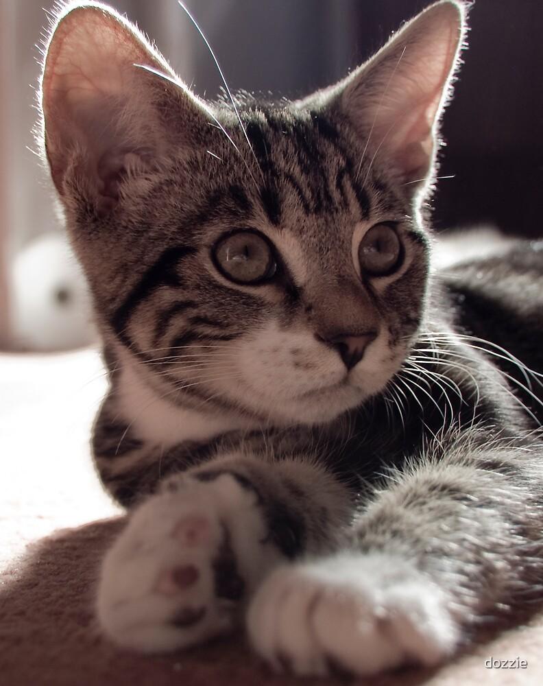Alert Kitten by dozzie