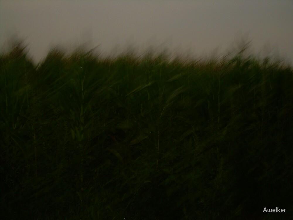 Grass in motion by Awelker
