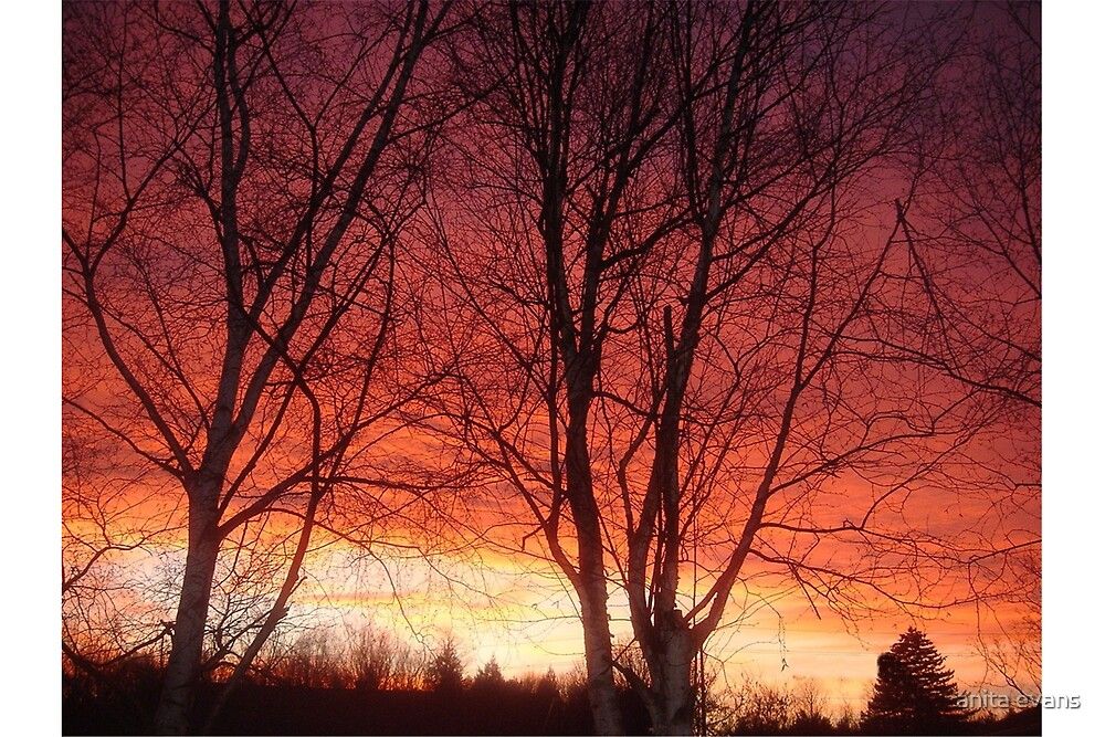 FIRE IN THE SKY by anita evans