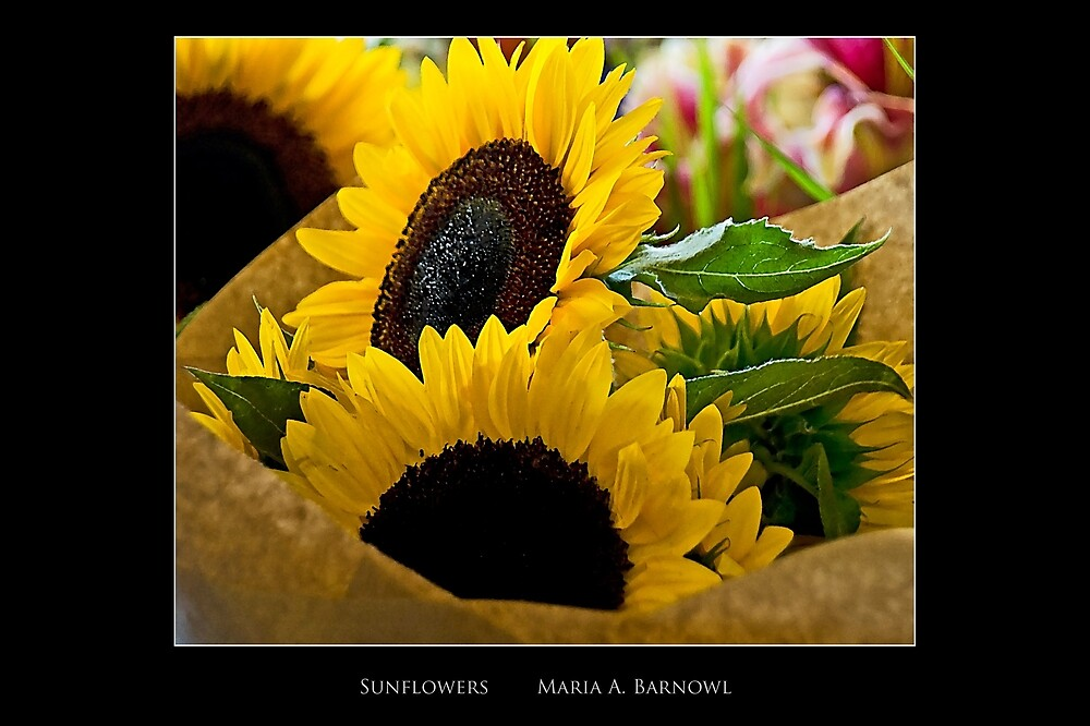 Sunflowers - Cool Stuff by Maria A. Barnowl
