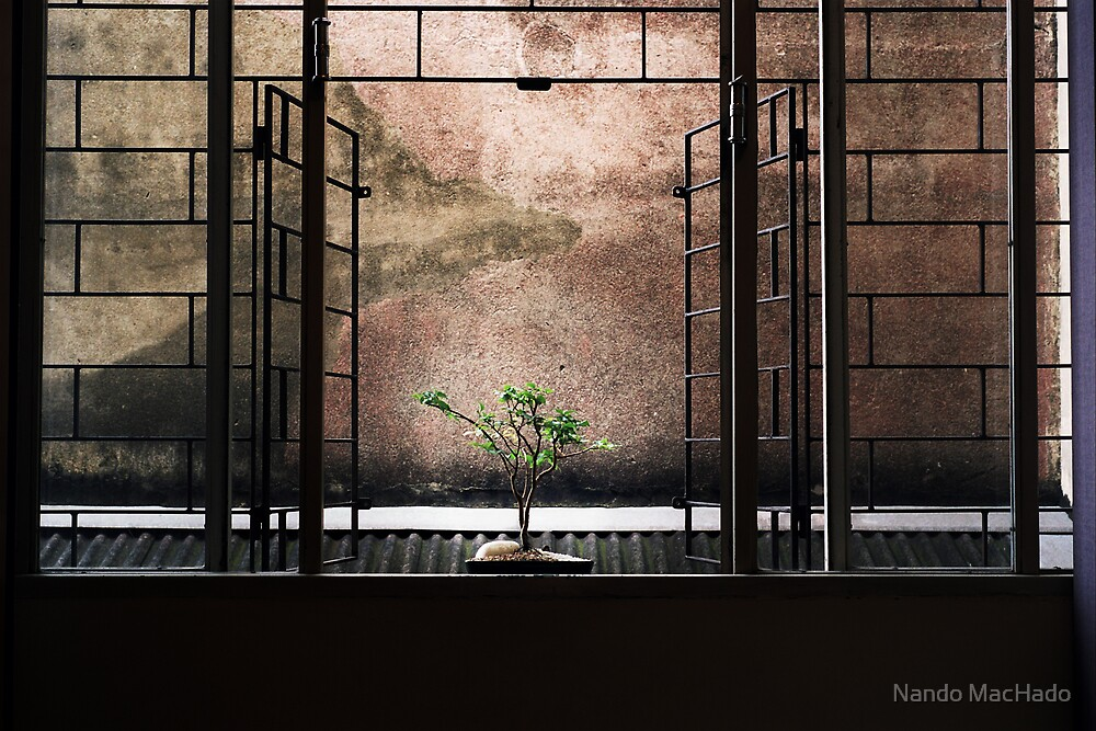 The Urban Way #6 - Garden by Fernando Machado