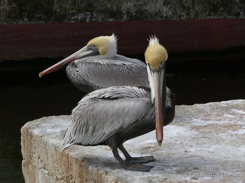 Pelican Pair by Tom Michael Thomas