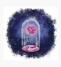The Enchanted Rose Photographic Print