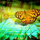 Butterfly Art #1 by Ann Barnes