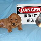 Buckeye- Danger Hard Hat Area by goldnzrule