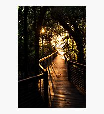 To the beach - Palm Cove, Queensland Photographic Print
