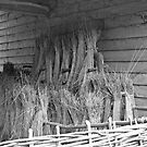 Harvest study - black & white by Mazzaloft