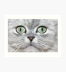 Cat closeup Art Print