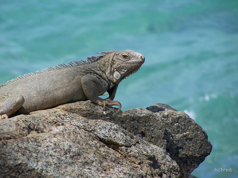 Iguana by lschreib