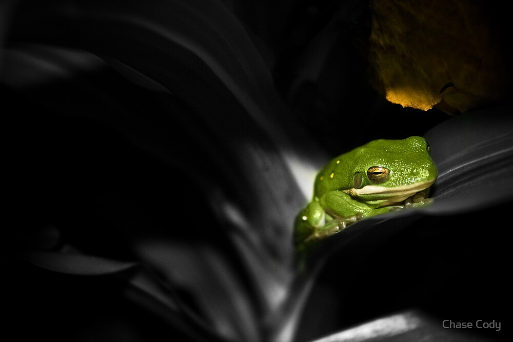 Jungle Frog by Chase Cody
