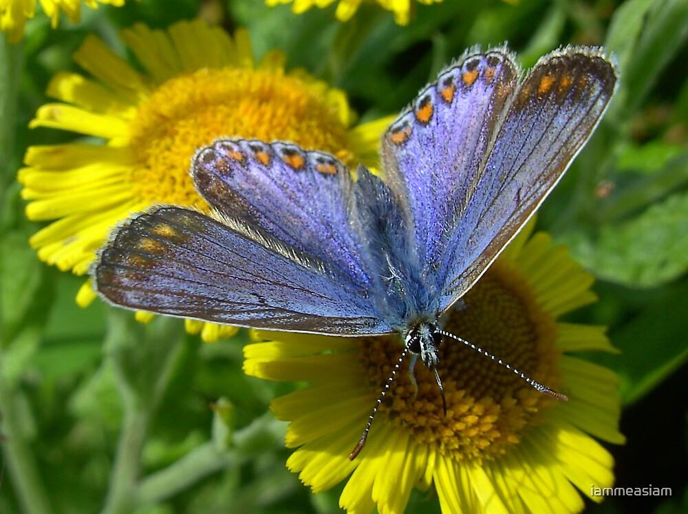 Iam Blue Butterfly by iammeasiam