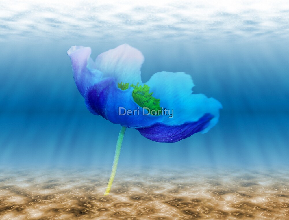 Water flower by Deri Dority