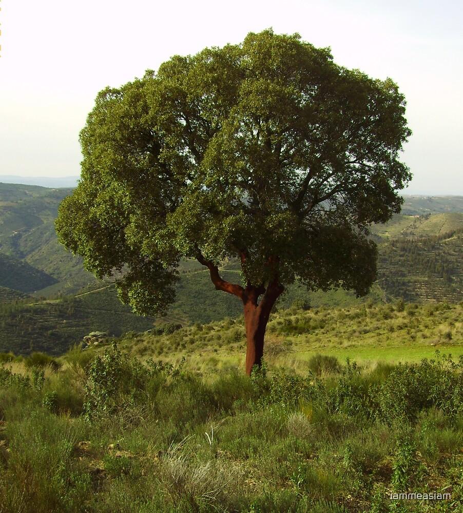 cork tree portugal by iammeasiam