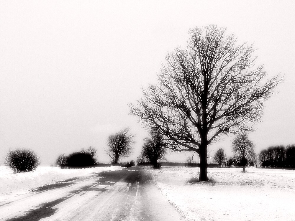 Winters Road by mikebruce11