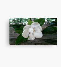 Single Magnolia Canvas Print