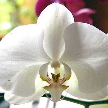 White  by kelek