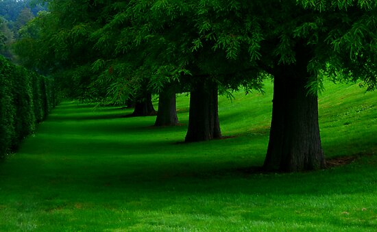 Tree Line by Sharon Ulrich
