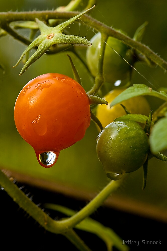 Cherry Tomatoe's with rain drops by Jeffrey  Sinnock