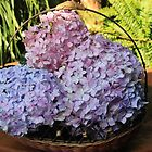 Hydrangeas in a basket by Hedgie's Nature & Gardening Journal