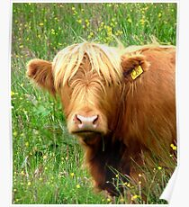 Buttercup says ' Who said beefburger ?'............ Poster