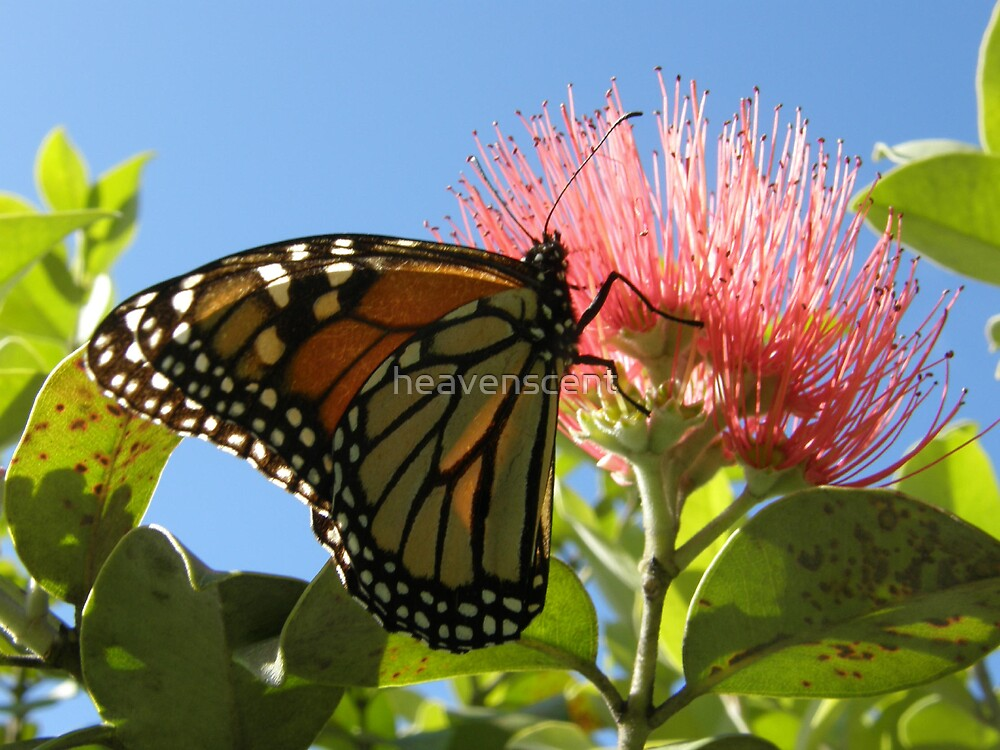 Butterfly by heavenscent