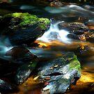 moss rocks by matthew maguire